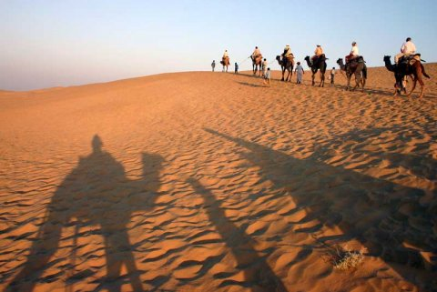 Camel train in the Thar desert